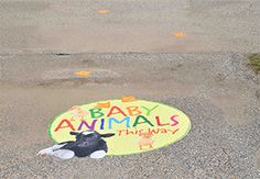 Using Asphalt Art, a custom ground graphic was created to guide people toward the baby animals, a cute way to wayfind.