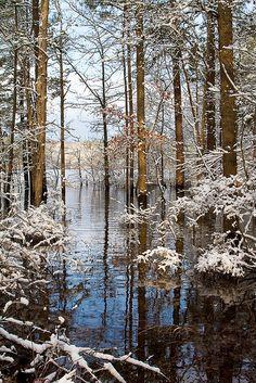 Dusting of Snow, Jordan Lake, central North Carolina