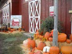 Red Barn Apple Orchard: U-pick Apples, Wagon Rides, Farm Market, pumpkins
