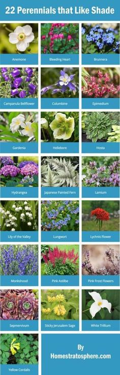 61 Ideas backyard shade plants flower beds for 2019 Plants That Love Shade, Shade Plants, Backyard Shade, Shade Garden, Patio Shade, Outdoor Shade, Country Landscaping, Front Yard Landscaping, Florida Landscaping