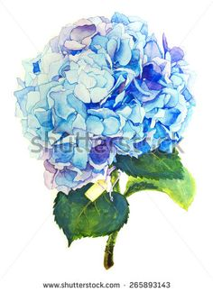 Hydrangea Watercolor Stock Photos, Images, & Pictures | Shutterstock