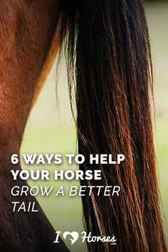 Could your horse's tail use some improvement? Tails are frustrating to care for because they grow slowly and break easily, but here are six ways that you can help your horse to grow a better tail. | #horses #equestrian #equine #pony