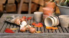 How to plant autumn bulbs