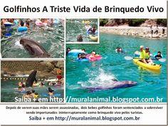 Mural Animal: Golfinhos A Triste Vida de Brinquedo Vivo
