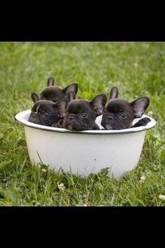 Chiots #pets