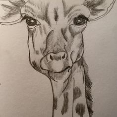 Pencil drawing of a giraffe.