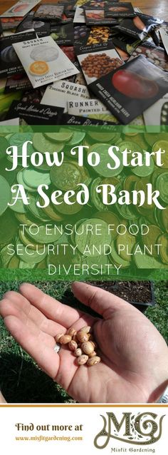 Why you need to start a seed bank on your homestead. Click to learn how to start a seed bank or pin it for later