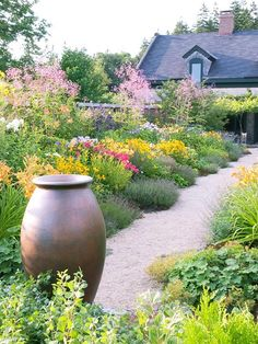 A flowering drought tolerant garden: Sages, Rudbeckias, Day Lilies, Yarrows, Lavenders