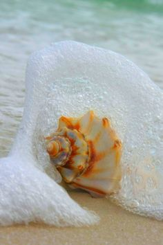 Seashell in the seafoam surf, whelk in the shell by the ocean in the summer #tropical #beach