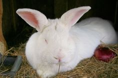 How to Raise Worms Under Rabbit Cages.