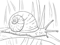 Garden Snail Coloring page