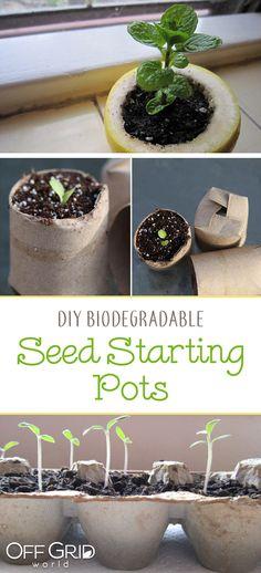 5 biodegradable DIY seed starting pots