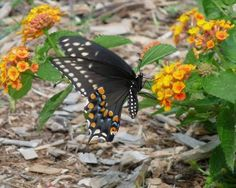 Working for the Weekend: Reviving the Southern Butterfly Garden - Birds and Blooms