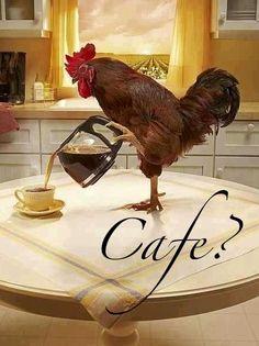 Nada mejor que una taza llena de delicioso cafe caliente y el sonido del canto de un gallo a la amanecer !   Feliz Dia / cada dia