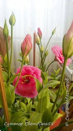 Цветок эустомы из холодного фарфора без молда и каттеров фото 30