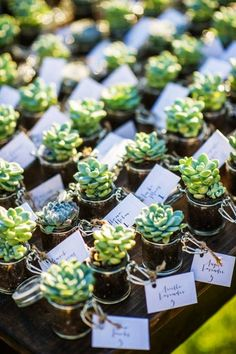 Mini Succulents Plants in Terrarium with name cards - Wedding Table Centerpiece - LoveItSoMuch.com