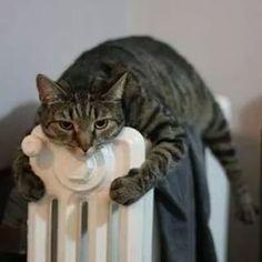 Schöön warm......