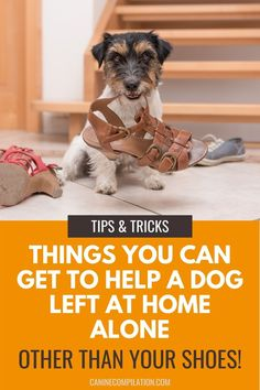 If you're no longer able to be at home with your dog most days, there are things you can do to help him manage the longer periods of being on his own. This can include doggy daycare or a dog walker. In addition, there are lots of gadgets and products you can get that will help a dog with separation anxiety, or help you monitor what's happening back at home. Dog Separation Anxiety, Dog Anxiety, Anxiety Tips, Leash Training, Dog Training Tips, Dog Care Tips, Pet Care, Dog Gadgets, Living With Dogs