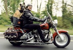 #Dogs on #Bikes! http://pup-protector.myshopify.com/