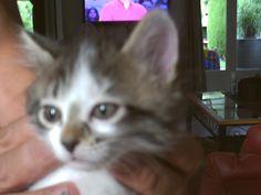 Donne petit chaton femelle née le 16 juin, merci de me contacter
