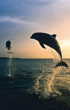Honduras - dolphins