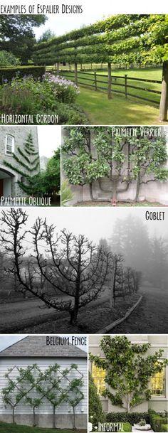 Landscape tree design – Espalier – you can do this with fruit trees (dwarf)! Fruit Garden, Garden Trees, Edible Garden, Flowers Garden, Garden Plants, Unique Gardens, Beautiful Gardens, Espalier Fruit Trees, The Secret Garden