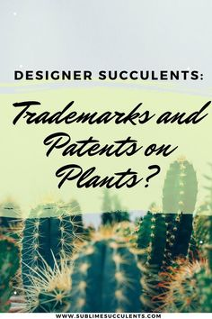 Learn about Designer Succulents: Trademark and Patents on plants. Read on to find out what it means, and what you can do. See more details on this pin! Succulent Planter Diy, Succulent Care, Succulent Arrangements, Flowering Succulents, Cacti And Succulents, Cactus Plants, What You Can Do, How To Find Out, Thornless Roses
