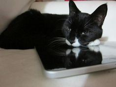 The 40 Hottest Cats In Tech