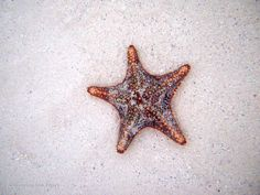 Star of the photo | Flickr - Photo Sharing!