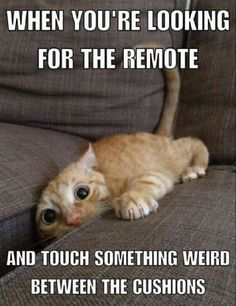 funny-looking-for-the-remote