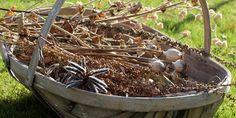 HØST OG TØRRING AF FRØ FRA HAVEN / How to harvest and dry flowerseeds