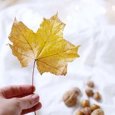 Autumn leave and light...  #autumn #leaves #light #photography #photoidea #myphotos @simplyinteriors.pl