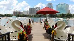 $15.00 per half hour. Each boat holds 5 people (children of all ages are welcome). Orange County: Lake Eola Park