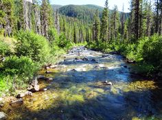 Looks like the right place: Idaho's Clearwater Basin