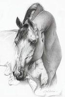Horse by CubistPanther on deviantART