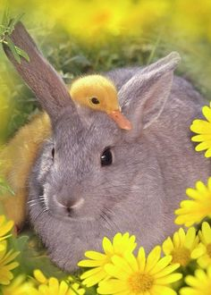 Cute Small Animals, Baby Animals Super Cute, Cute Funny Animals, Animals Beautiful, Cute Bunny Pictures, Baby Animals Pictures, Cute Animal Pictures, Duck Pictures, Cute Ducklings