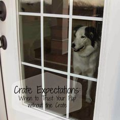 Crate Expectations, the is all about when you should be leaving your dog home alone outside of their crate. It lets you know when to start the process, and well as tips and tricks for success.