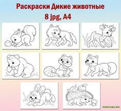 Животные - Foto