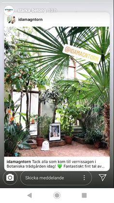 Tack, Plants, Flora, Plant