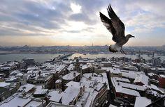 турция зима чайка