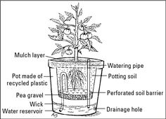 Cool design for self-watering container. One of my quests this year...water less!