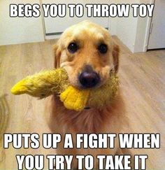 Begs you to throw toy…