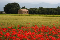 Springtime in Provence ! Printemps en Provence! #Vaucluse #Provence #printemps #spring #springtime #coquelicots #poppies #nature
