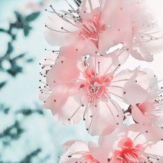 Aqua/Turquoise / Pink