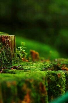 Super Ideas For Nature Photography Trees Green Woods Plante Carnivore, Walk In The Woods, Nature Wallpaper, Macro Photography, Nature Pictures, Amazing Nature, Mother Earth, Beautiful World, Scenery