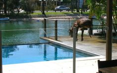The great escape!    5 Essential House Sitting Questions for House Sitters Blog