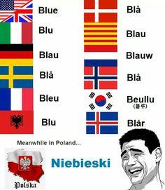 Som gresk i mine ører :-P Really Funny Memes, Stupid Funny Memes, Wtf Funny, Hilarious, Funny Cats, Polish Memes, History Memes, Haha, Funny Comics