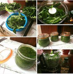 Obrázek z Recept - Pesto z medvědího česneku by Romča Kitchen Hacks, Chutney, Korn, Pesto, Spinach, Smoothie, Food And Drink, Vegetables, Cooking