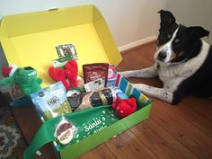 Pet Treater boxes have goodies for the whole family! For our full review and coupon codes, check out our blog post!