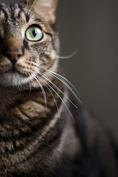 """In a cat's eye, all things belong to a cat."" --English Proverb"
